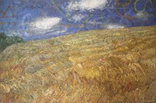 Wheatfield at Llanychaer