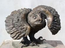 Owlet's Dancing